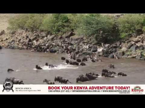 Classic Migration Safari