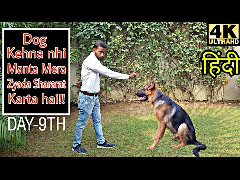 Dog training - Day 9th  | How to control dog over-excitement, Puppy Stop Biting problem 4K (Hindi)
