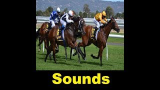 Horse Race Sound Effects All Sounds