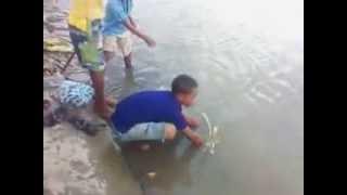 Niños expertos, pezcan sin anzuelo ni carnadas en (Calamar Bolivar)