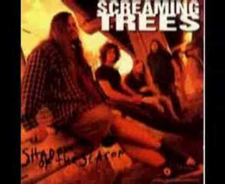 screaming-trees-dollar-bill-vaios000