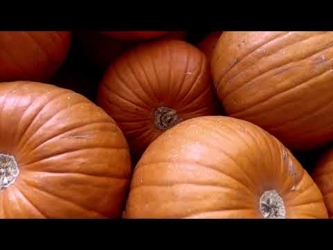 Cover photo for Homegrown | Quick Pumpkin Cooking Tips