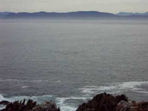 Right Whales in Hermanus – South Africa