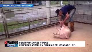 4 Granjas del Condado Lee acusadas de maltrato animal