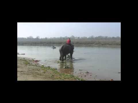 elephant bathing nepal