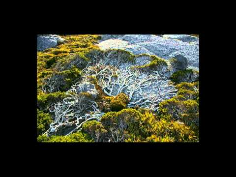 peter-von-poehl-going-to-where-the-tea-trees-are-martialiseureka