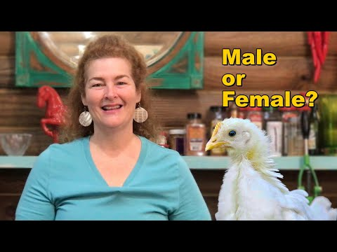 How To Tell If A Chick Is Male Or Female
