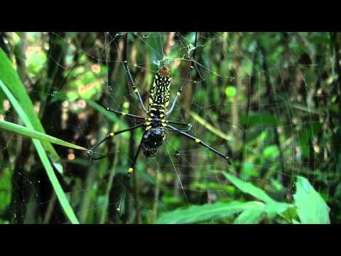 Lawachara Forest Wild Version Beautiful Bangladesh Srimangal Sylhet