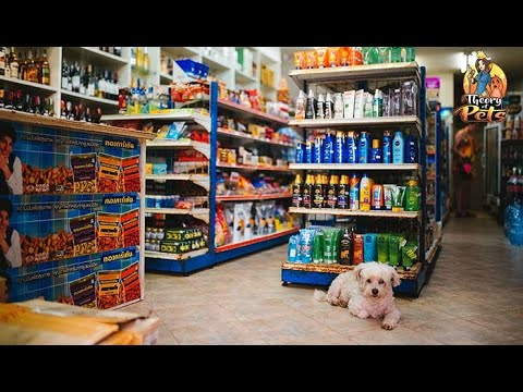 TOP #111: How Your Dog Influences Your Shopping Habits