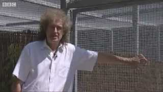 Brian May Needs your help! Stop the Badger Culling! 1