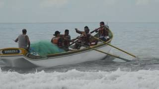 Turma da canoa borboleta do campeche na água.