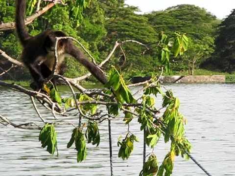 lac nicaragua singe