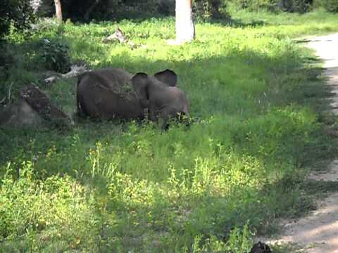 Baby Elephant – South Africa