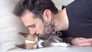 Why chihuahuas are the best friends