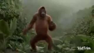 Coruja doida + Mulher Gritando + Macaco Dançando