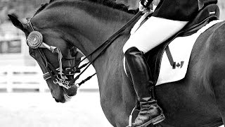 We Adapt, We Overcome ~Equestrian~