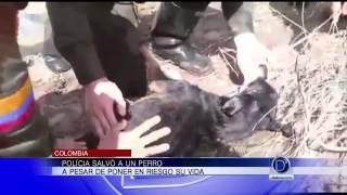 D'Latinos Noticias Edición Nacional 11pm (Mayo 21 de 2015)