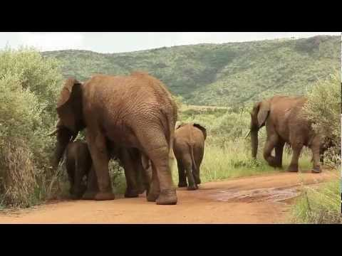 Laura Grier on Safari in Pilanesburg and Monkeyland on the Garden Route