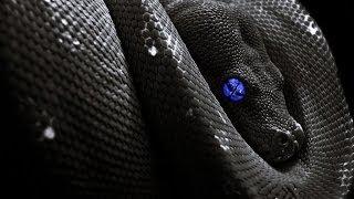 Osu! Feint - Snake Eyes (Feat. CoMa) [Extreme] C.Cam CTL480L