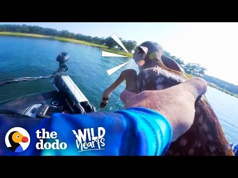 Guy Rescues Baby Deer From the Middle of a Lake   The Dodo Wild Hearts