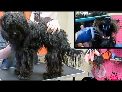 Dog Matted Grooming Does It Hurt Your Dog