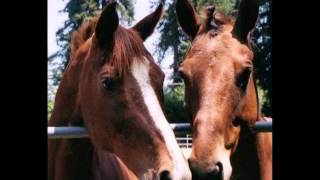 Horses Healing Hearts, Danville, California