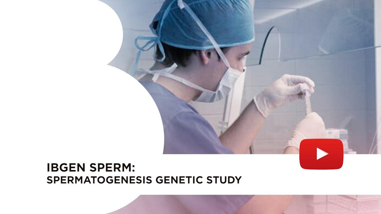IBgen sperm: spermatogenesis genetic study
