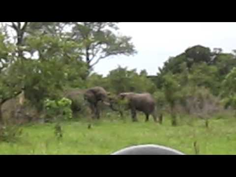 Jessie's Journeys – South Africa – Elephants