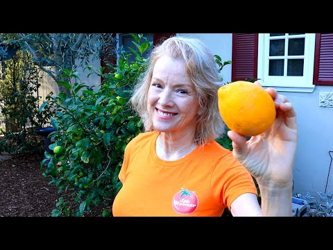 MORE WORK and ONE LEMON | Garden Transformation Part 13