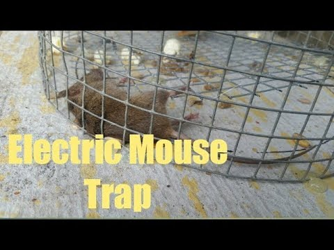 Homemade Electric Rat and Mouse Killer