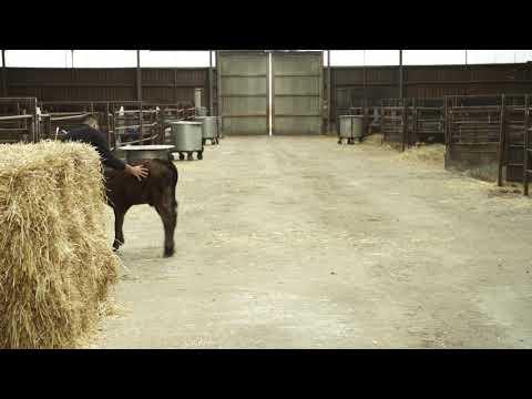 Smart hantering av kalven 18 19