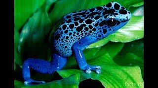 The most beautiful and poisonous frogs