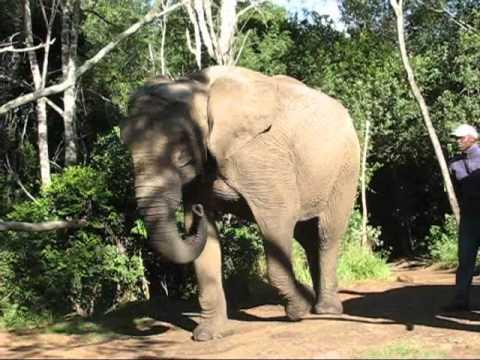 MVI 3724 elephant shake