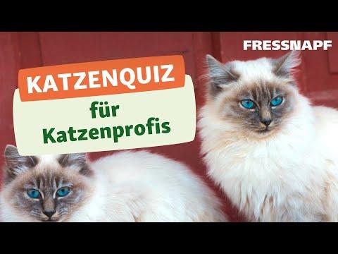 Das große Quiz zu Katzen  - Wer kennt sich aus?