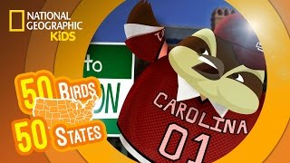 South Carolina - Feat. Rappers MC Wren the Wren and Wild Bill the Wild Turkey   50 BIRDS, 50 STATES