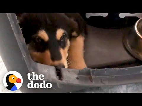 Trembling Foster Puppy Turns Into The Happiest Dog | The Dodo Foster Diaries