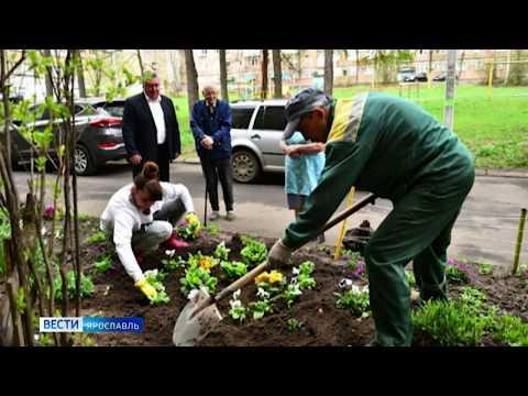Во дворах ветеранов Красноперекопского и Фрунзенского районов организовали цветочные клумбы