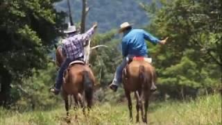 Mis Tres Caballos - El Maestro Cantautor