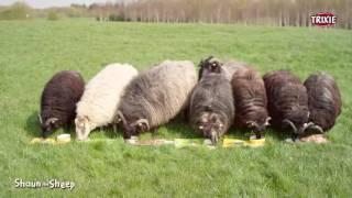 TRIXIE - A Ovelha Choné (Shaun the Sheep)