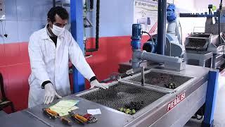Oléiculture : Les producteurs de l'huile d'olive confiants malgré les contraintes