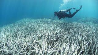 Arrecifes del Caribe Mexicano se deterioran por causa del ser humano Video 2017