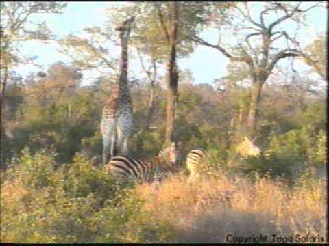 African Safaris to Inyati Game Reserve