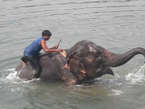 Sauraha, Nepal – elephant bath