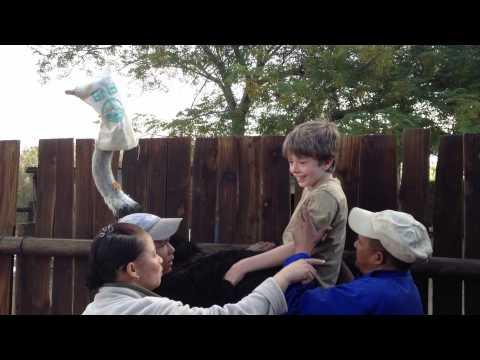 Ostrich Ride!