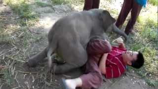 ลูกช้างจอมซน
