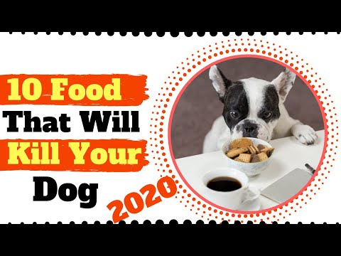 10 Foods Dogs Can't Eat Dangerous Foods That Can Kill Dogs 2020 ! Dog Health Tips