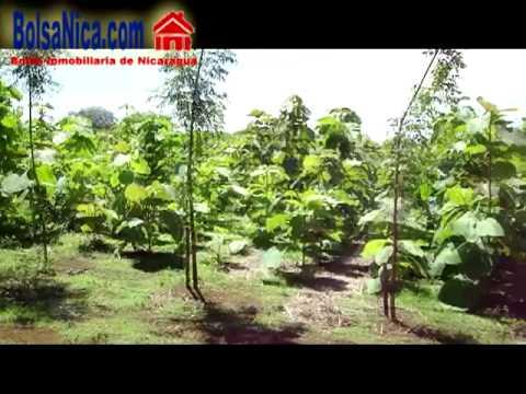 Venta de Fincas en Diriamba, Nicaragua