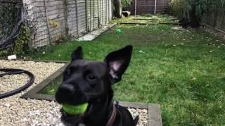 Asombroso truco de un perro en super cámara lenta