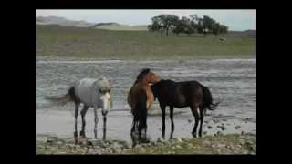 Болдбаатар - Намирын гол