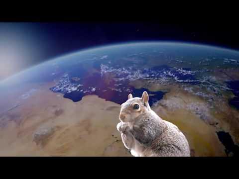 Story Of A Squirrel de Apologetix Letra y Video